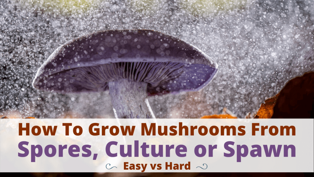 how to grow mushrooms from spores