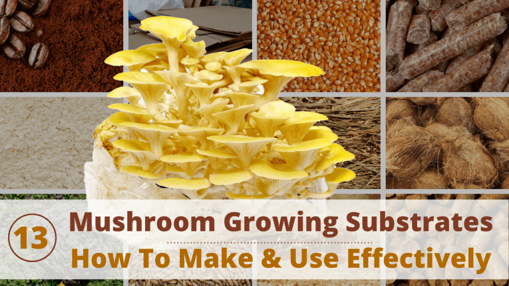 best mushroom growing substrates