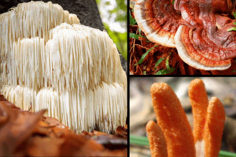Top 3 Medicinal Mushrooms For Brain Health