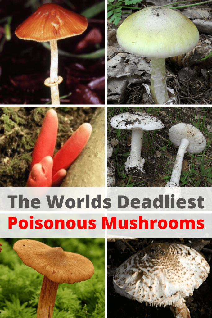 Worlds Deadliest Poisonous Mushrooms