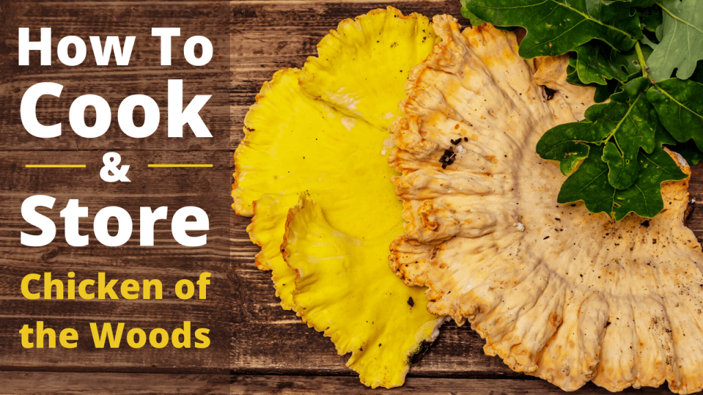 how to cook and store chicken of the woods mushroom