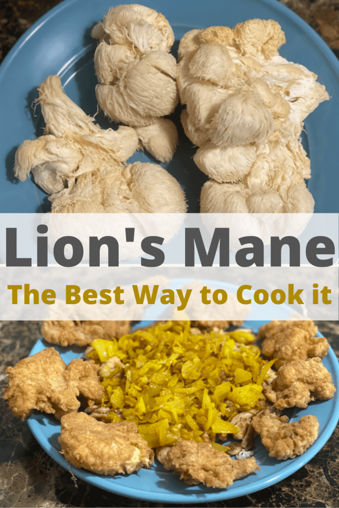 How to Cook Lion's Mane Mushroom