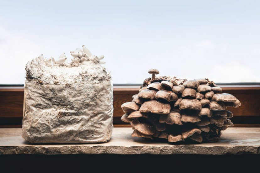 How To Grow Mushrooms At Home – Beginner To Advanced