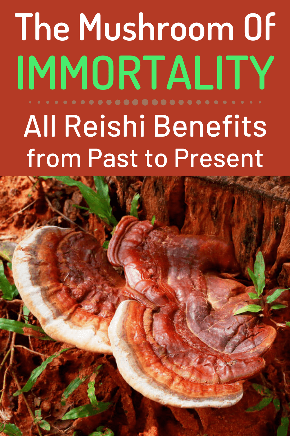 mushroom of immortality all resihi benefits