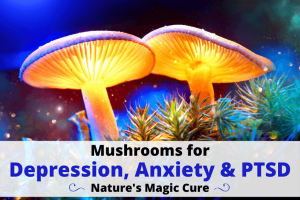 mushroom for depression anxiety ptsd