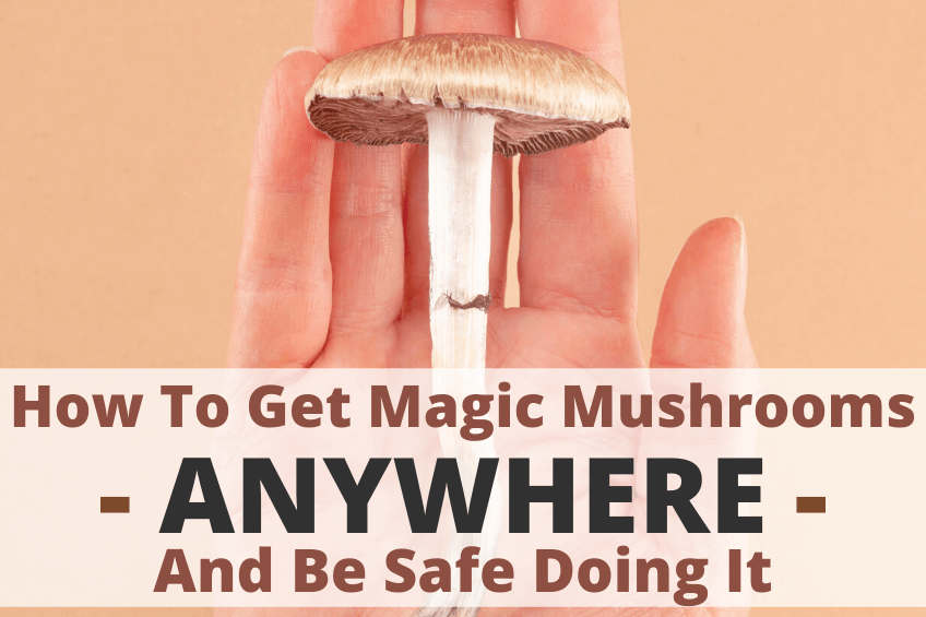 how to get magic mushrooms anywhere