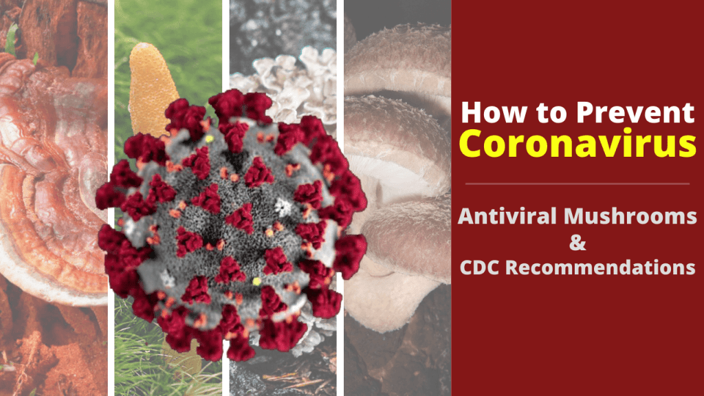 how to prevent coronavirus antiviral mushrooms