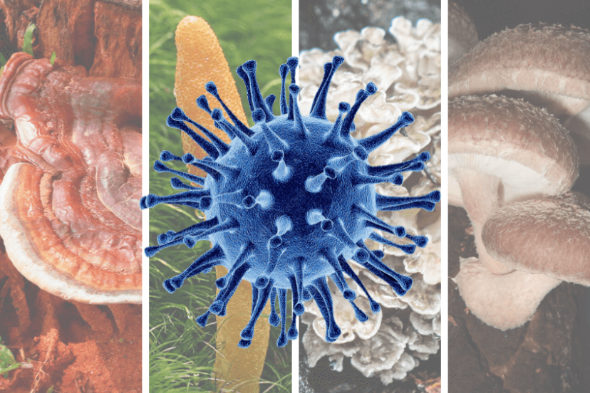 Top 4 Medicinal Mushrooms For Viruses | Antiviral Immune Boost