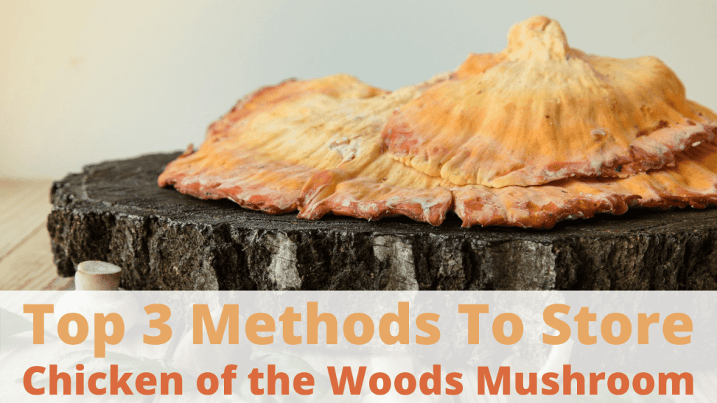 how to store chicken of the woods