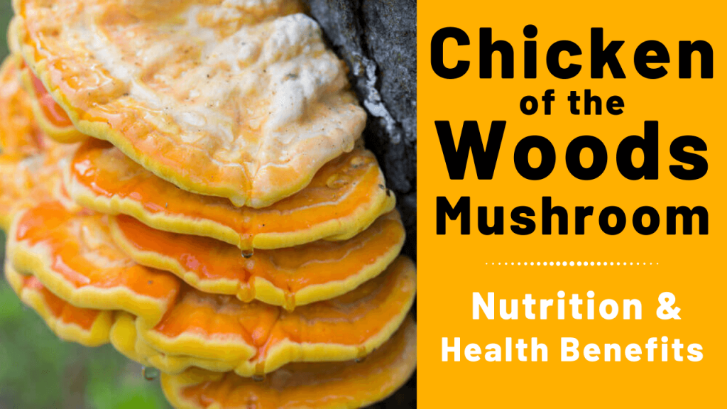 chicken of the woods nutrition & health benefits