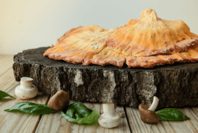 How To Store Chicken Of The Woods Mushroom
