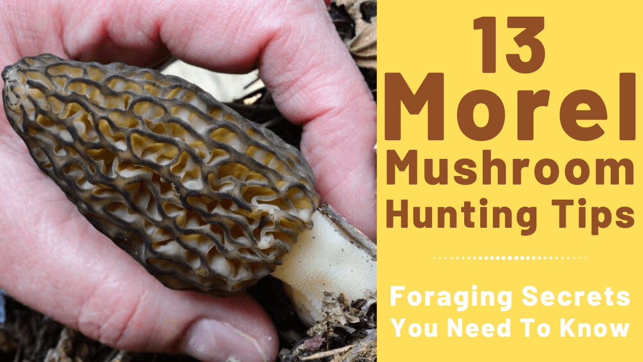 morel hunting tips