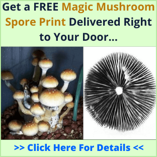 golden teacher cubensis spore print
